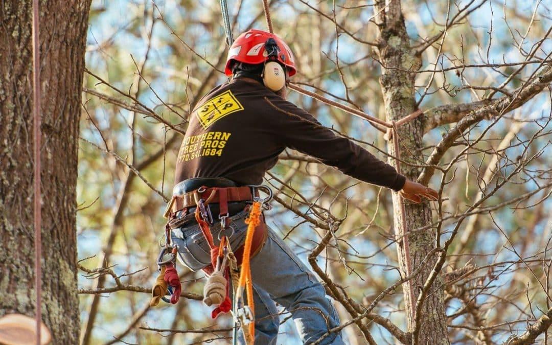 Certified Arborists Offer Tree Risk Assessment In The Atlanta, GA Area