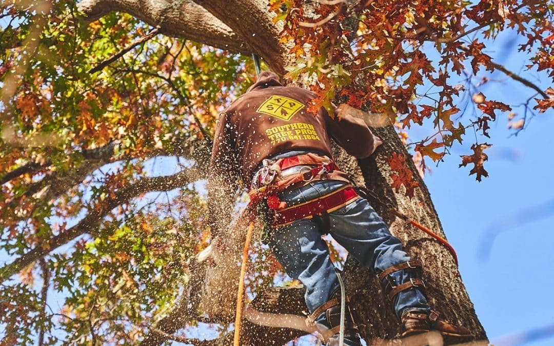 Atlanta Area Tree Experts Are Available for Arborist Consulting