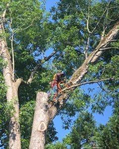 Atlanta tree removal