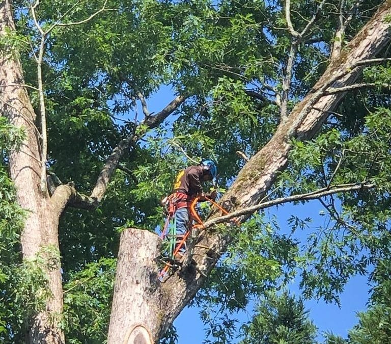 Smyrna Tree Care Experts Offer Fall Trimming Tips