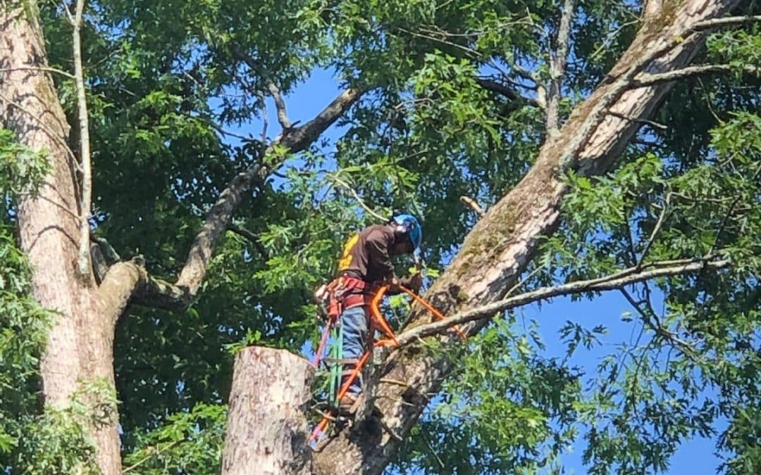 Tree Care Experts in Atlanta, GA, Are Available For Spring Tree Pruning