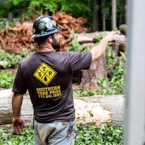 Arborist Atlanta