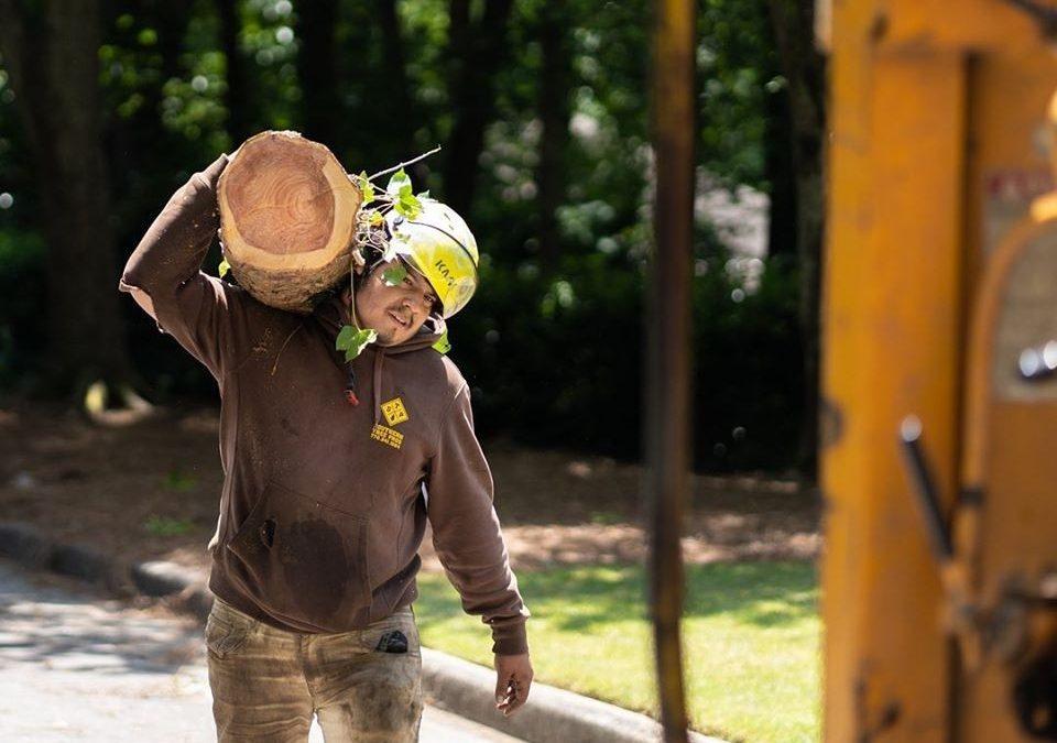 Customized Tree Services in the Atlanta, GA area