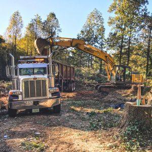 tree removal Atlanta GA