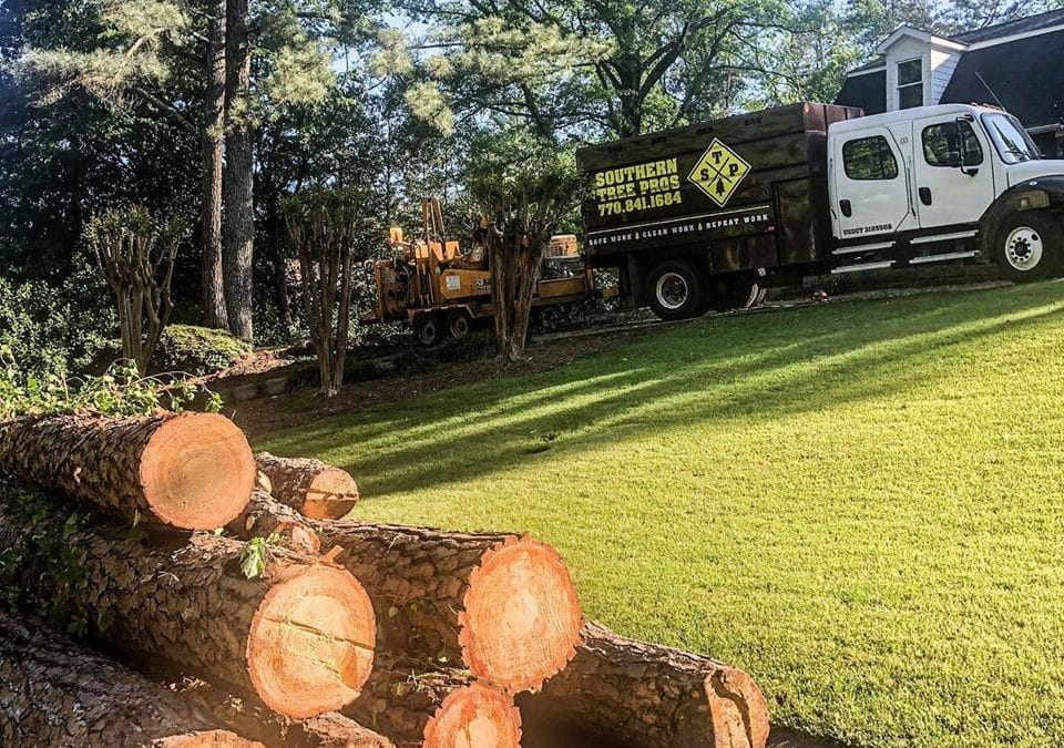 Tree Root Removal: A How-To Guide