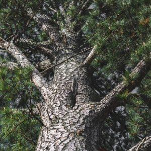 Services Tree Care Atlanta GA