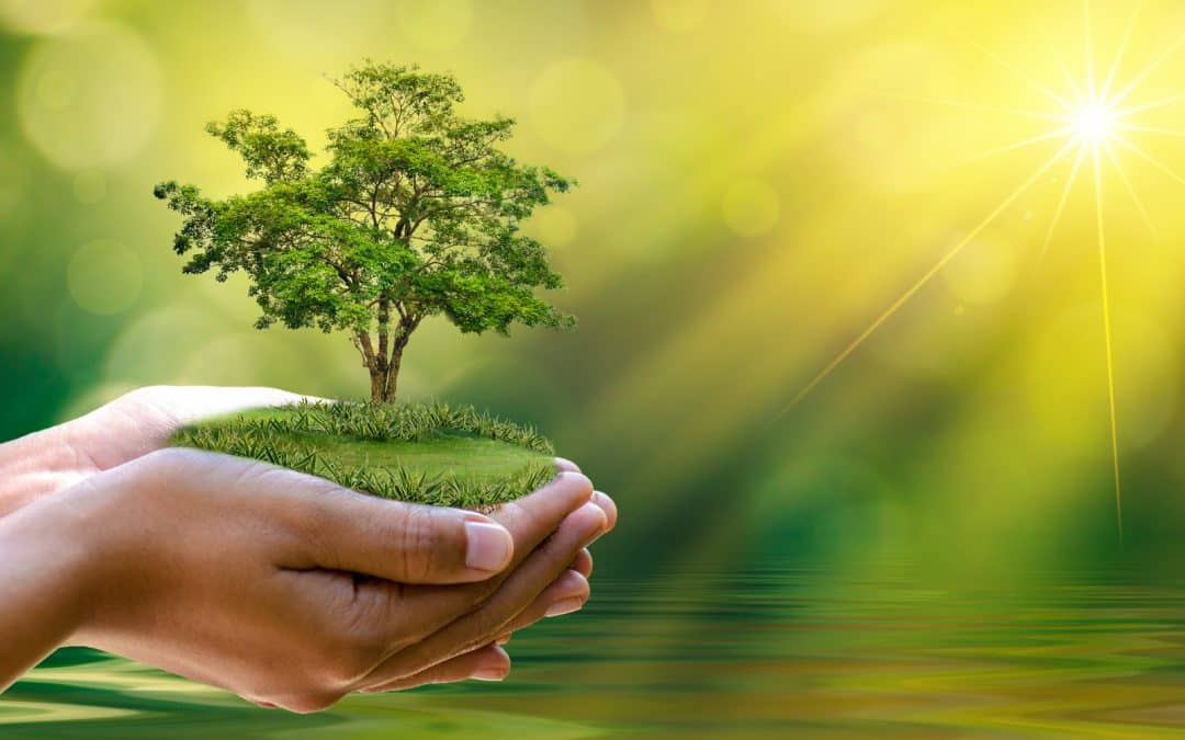 Georgia Tree Planting and Care Tips