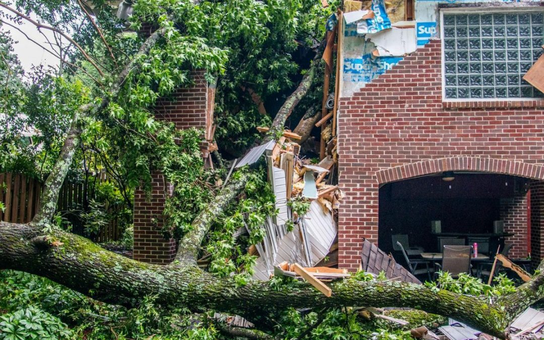 Southern Tree Pros Offer Professional Emergency Trees Removal In Atlanta, GA