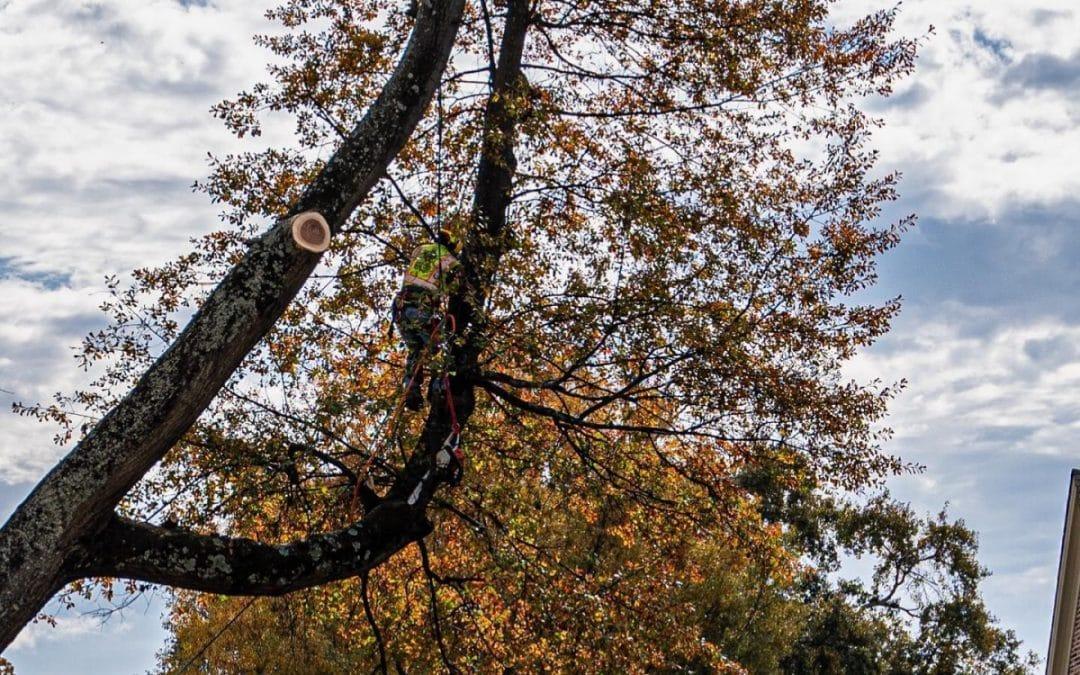 Tree Service Professionals in Alpharetta Share Fall Tree Care Tips