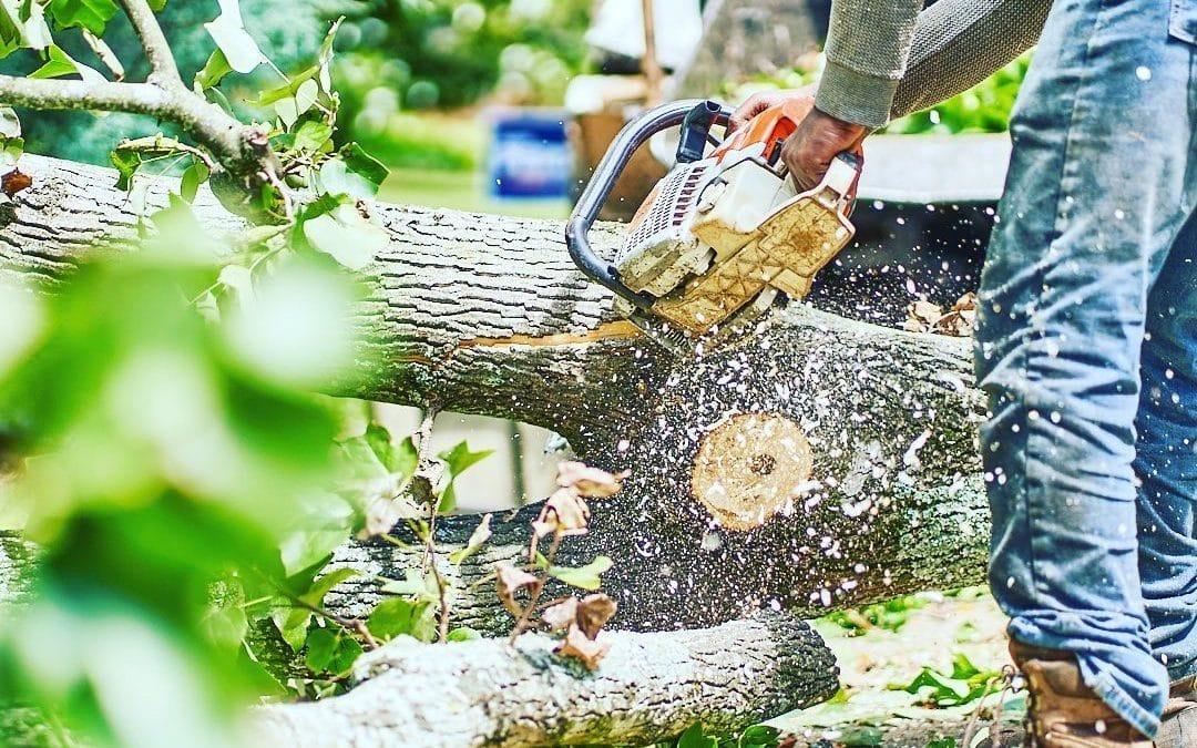 Smyrna Tree Company Offers Tree Risk Assessments To Clients