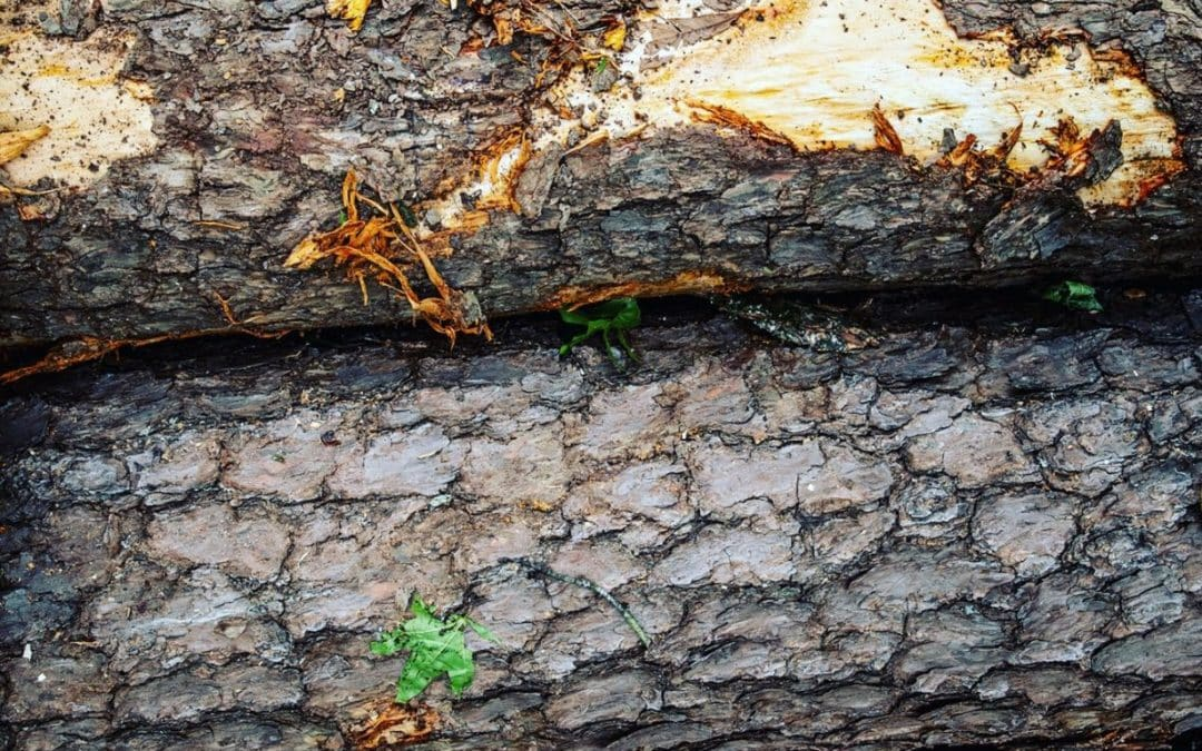 Southern Tree Pros Offers Comprehensive Tree Health Care Service
