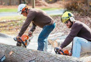 tree trimming Atlanta GA
