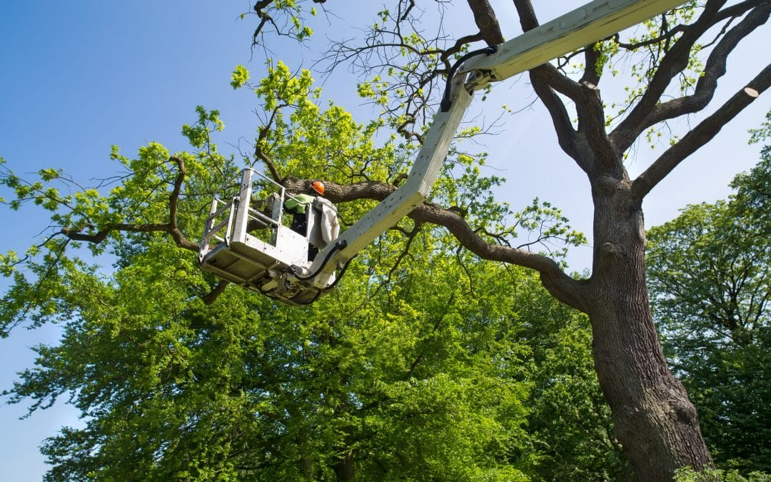 Tree Removal: Why You Should Hire Professionals