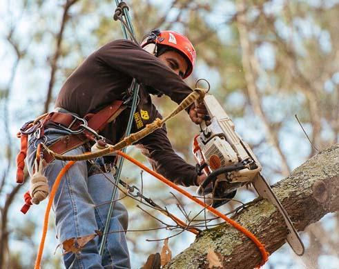 Guy Sawing Tree