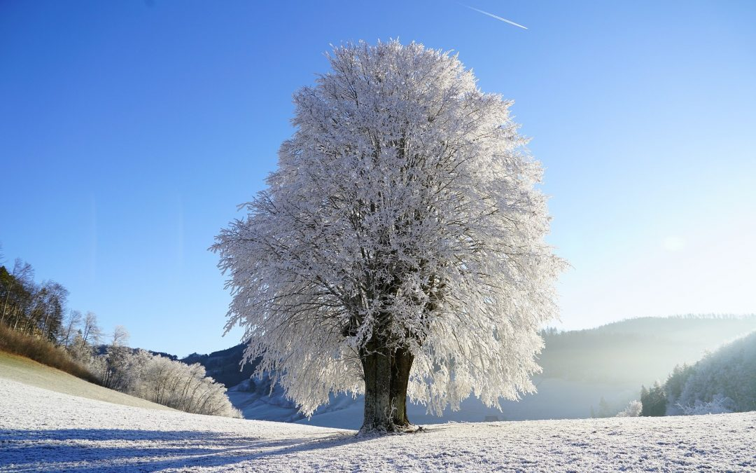 Taking Care of Trees in Winter: Five Key Tips